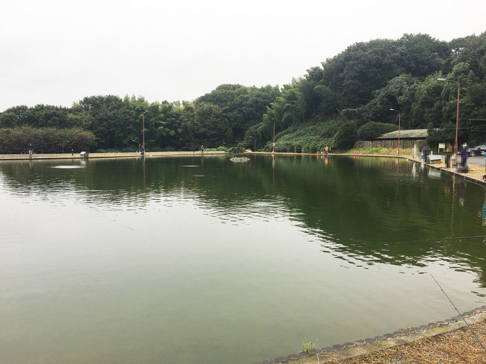 BerryPark in FISH ON!王禅寺の釣り池の様子