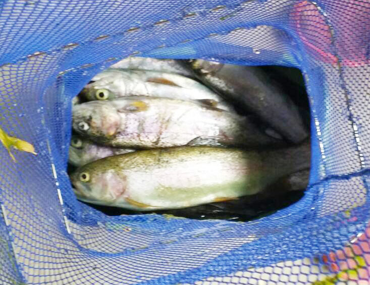 BerryPark in FISH ON!王禅寺は釣った魚を持ち帰れる