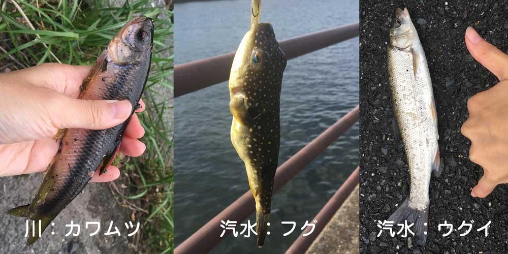 田舎で爆釣した魚(フグ・ウグイ)