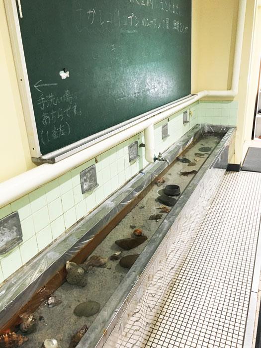 むろと廃校水族館(手洗い場にも魚の展示)