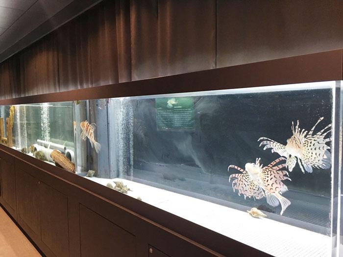 むろと廃校水族館(ミノカサゴ)