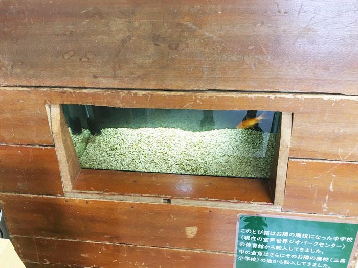 むろと廃校水族館(跳び箱水槽に金魚)
