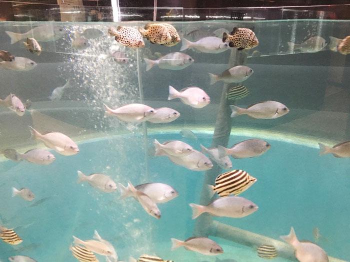 むろと廃校水族館(巨大水槽)